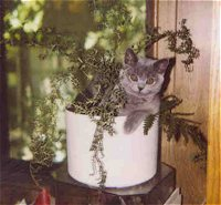 Doesn't every kitten hang out in a flower pot?